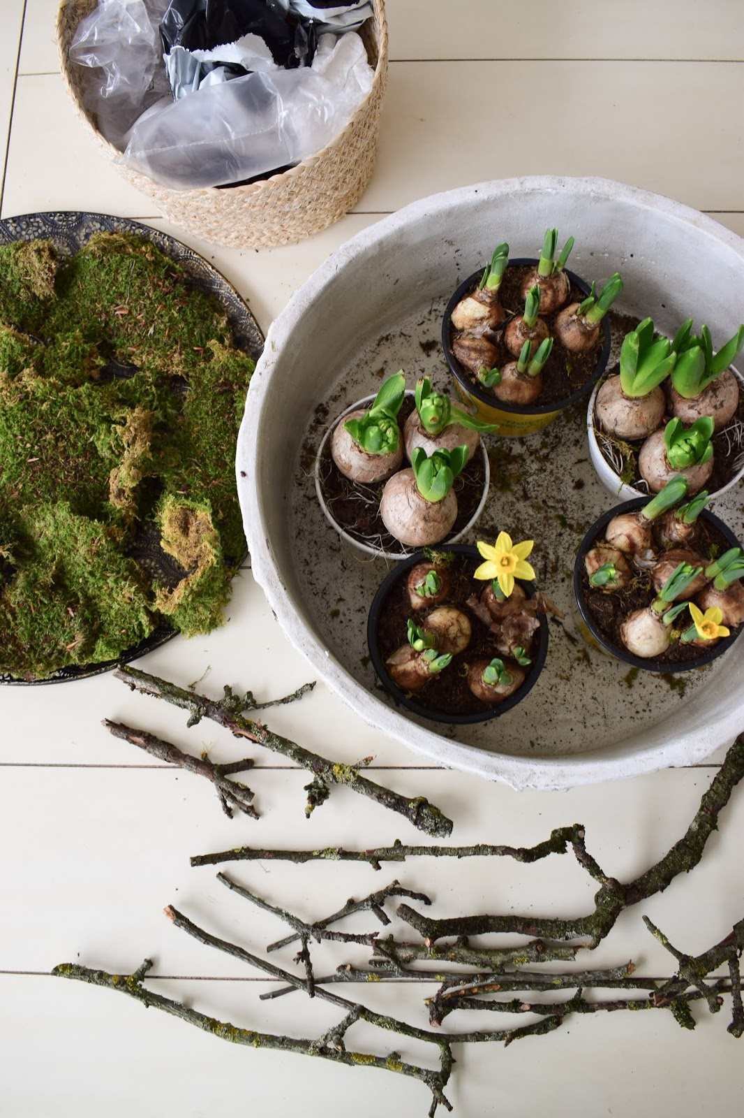 Frühlingsdeko selber machen mit Naturmaterialien: Moos, Frühlingsblüher, Zweige. Dekoidee Frühling Tischdeko natürlich basteln