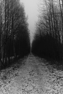 https://niilasnordenswan.tumblr.com/post/169776969072/niilas-nordenswan-photography-boulevard
