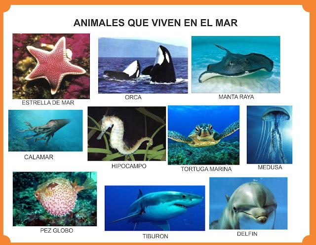 Ejemplos de animales que viven en el mar.