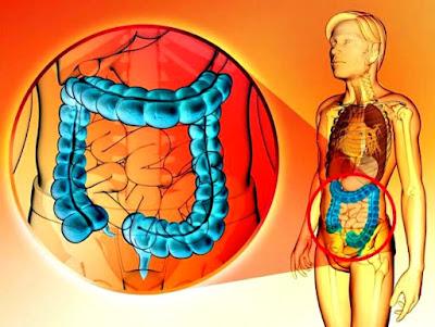 Bacterias parásitos purgarse intestinos