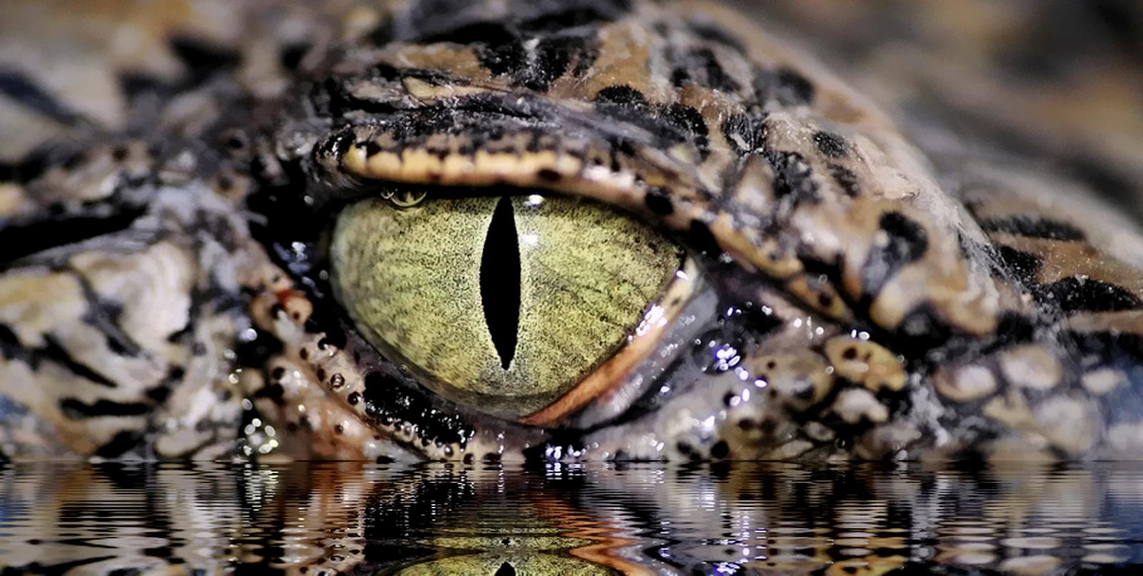 5 Spesies Hewan Purba Indonesia yang Masih Hidup