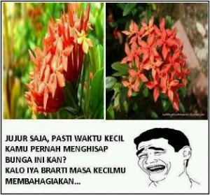 Meme Bunga Asoka