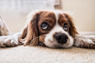 Elämän tarkoitus - koirakin sen tietää