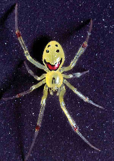 Cool smiling face on back of spider