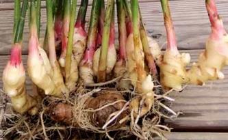 perkembangbiakan Vegetatif