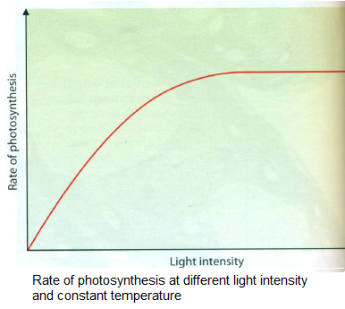 science paper about effects of light intensity on photosynthesis Light intensity directly affects the light-dependent reaction in photosynthesis and indirectly affects the light-independent reaction light is a limiting factor when the light intensity is too low to allow the light -dependent reaction to proceed at its maximum rate.