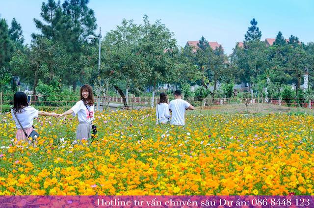 vườn hoa cải dự án the phoenix garden