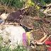 BREAKING: Nakaka-highblood na Dahilan Kung Bakit PInatay ang 6 na Bihag ng Maute
