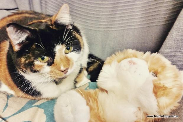 cat cuddling cat toy