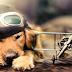 Consejos para viajar acompañado de tu perro