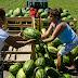Dinnyetermelési kampányt indít az agrárkamara