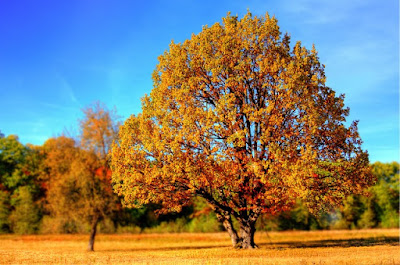 autumn fall tree with leaves changing color