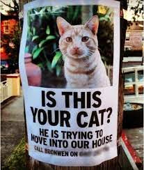 Posteres divertidos de animales