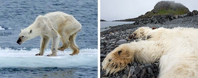 13 Shocking Pictures Prove That Nature Is Sending Out An SOS