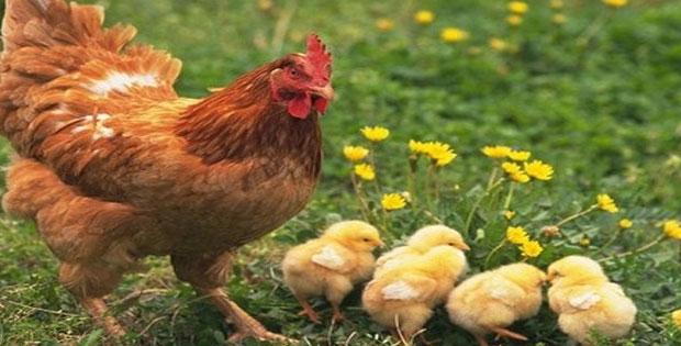 Penggolongan Hewan Berdasarkan makanan dan tempat tinggal