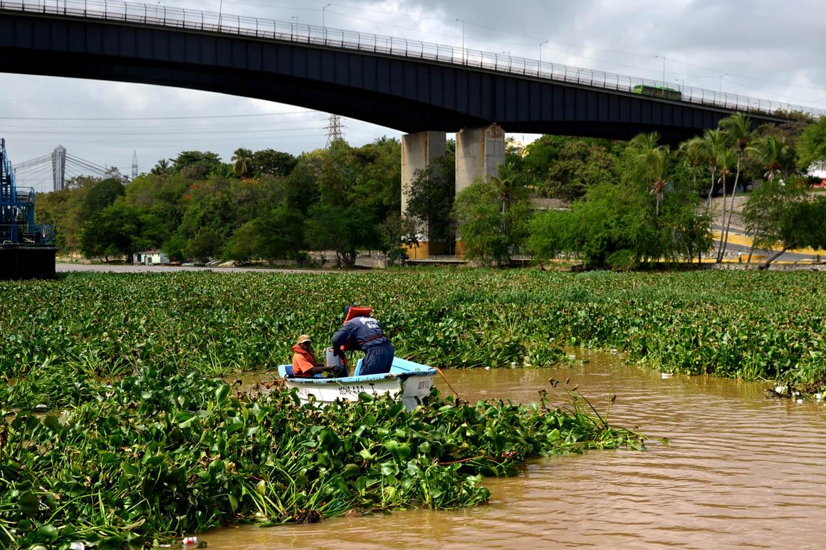 Resultado de imagen para gran  cantidad de lilas que invaden sus aguas