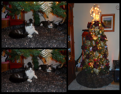 Anakin The Two legged Cat's Christmas Tree