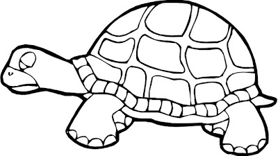 baby turtle coloring pages to print colorings net