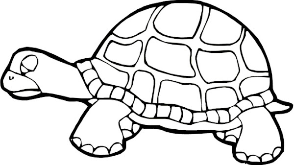 Cute sea turtle coloring pages for Cute coloring pages of turtles