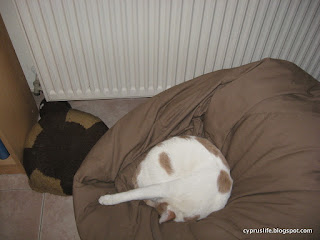 Alex, the large white cat, likes to curl up and sleep in the beanbag on a cold day