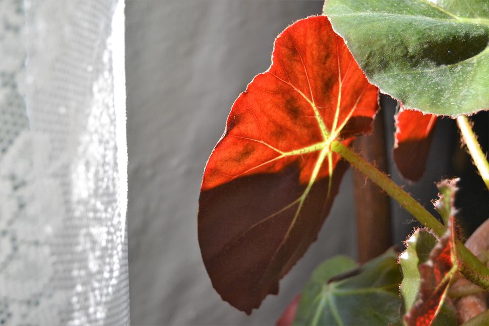 Qué necesitan tus plantas en otoño, si todavía no lo sabes, no te preocupes yo te lo cuento con todo detalle