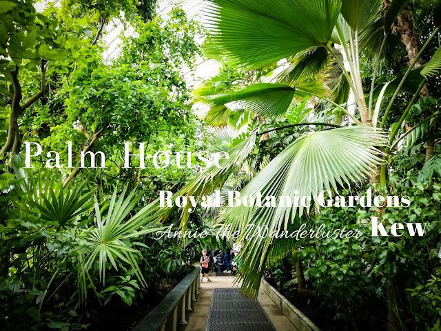 KEW Gardens 邱園 Palm house