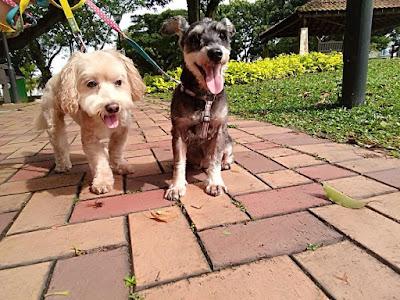 Dog boarding in Singapore