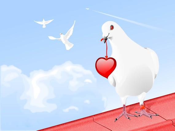 Valentinovo golubica srce download besplatne pozadine za desktop 1152x864 slike ecard čestitke