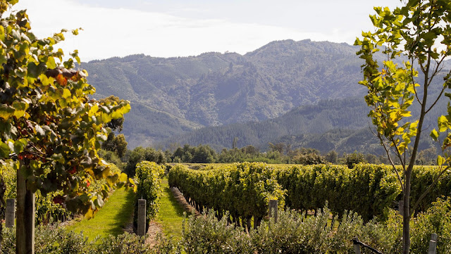 2 weeks in New Zealand: Explore Blenheim vineyards in the Marlborough Region