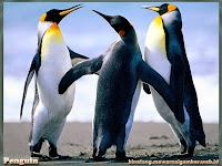 gambar pinguin