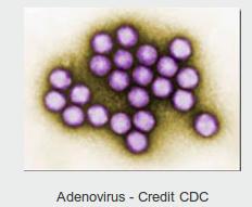 https://www.cdc.gov/adenovirus/index.html