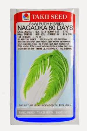 crop keras,tahan simpan,tahan pecah, tahan busuk hitam, cepat panen,Nagaoka,takii seed,Sawi Putih