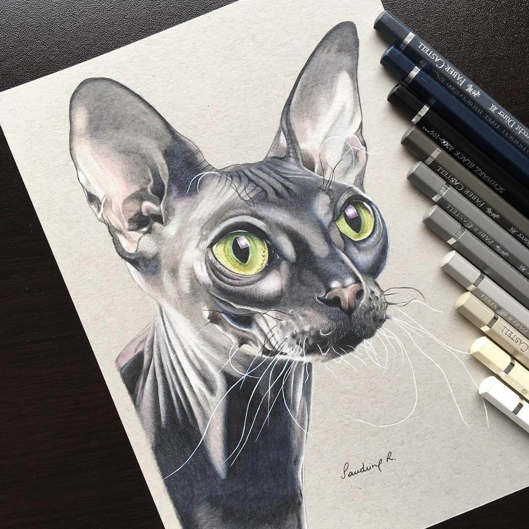 11-Strathmore-the-Sphynx-cat-Sandrine-R-Sweet-Realistic-Animal-Portrait-Drawings-www-designstack-co