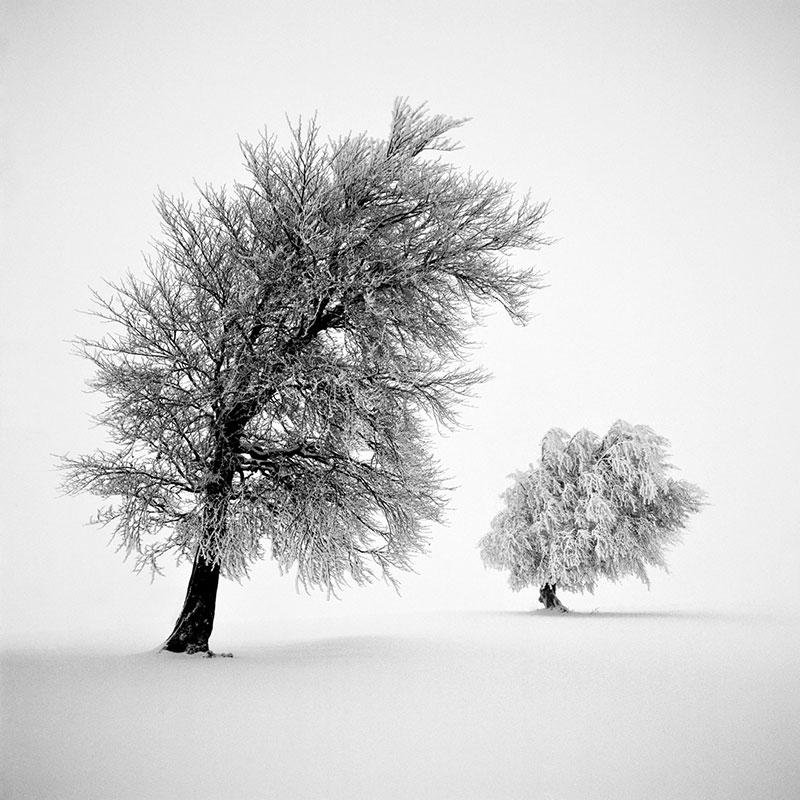 Frozen Life: Photos by Michael Schlegel