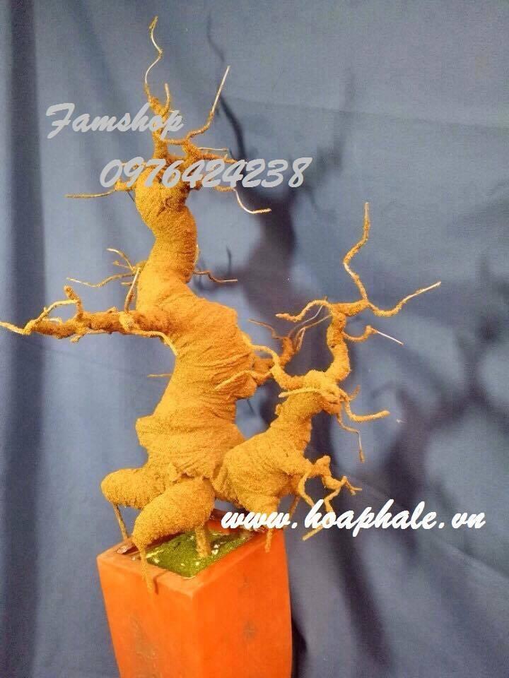 Goc bonsai mai dao o Doan Ngoc Phach