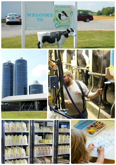 Stop by Mt. Crawford Creamery near Harrisonburg to watch the daily cow milking & talk to the dairy farmers. #BlueRidgeBucket #Trekarooing