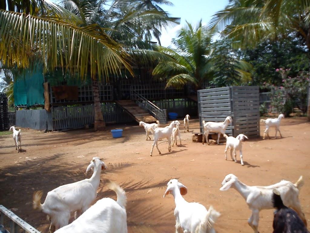 Rajsri Goat Farm