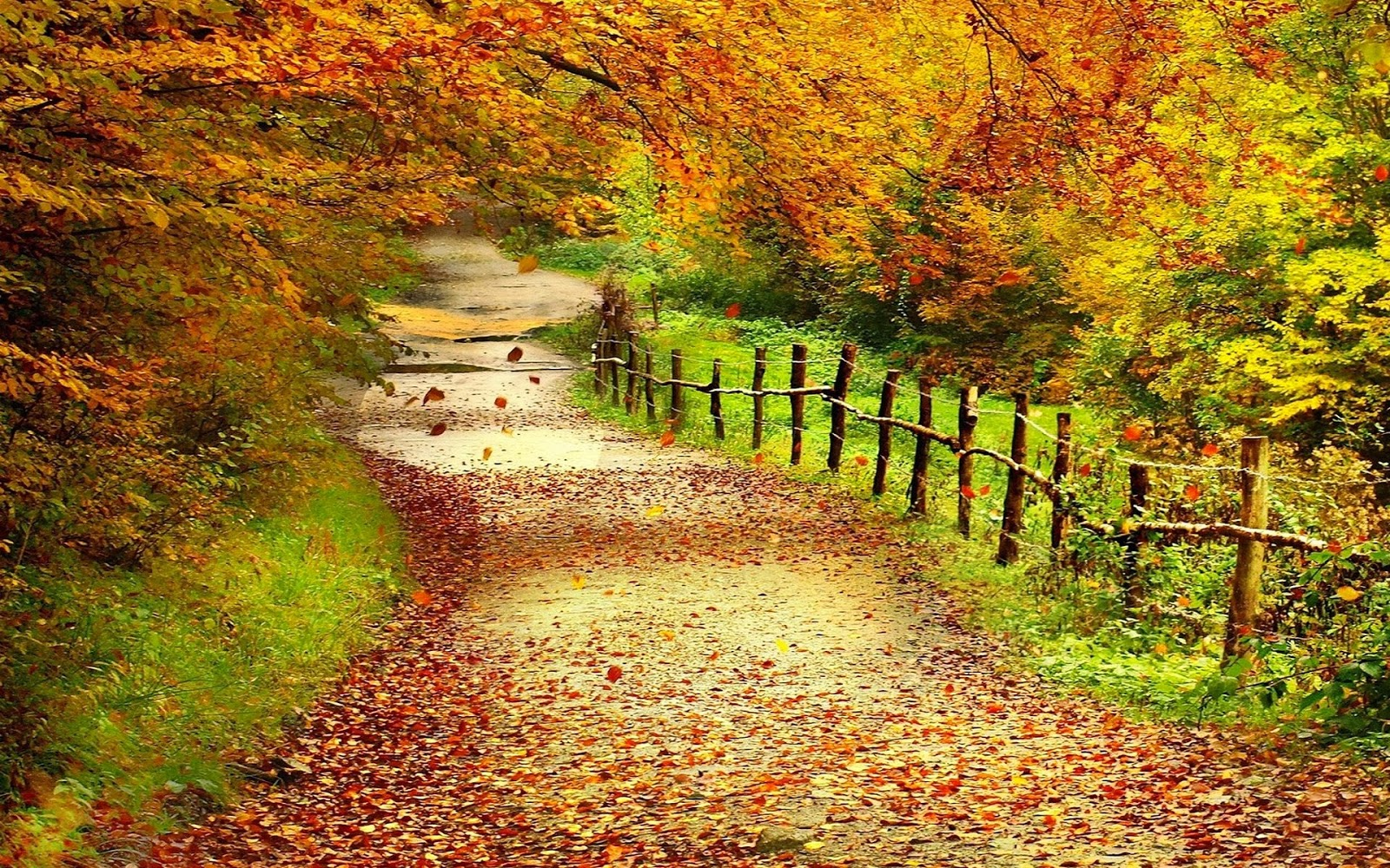 Autumn Yellow Trees wallpaper  nature and landscape
