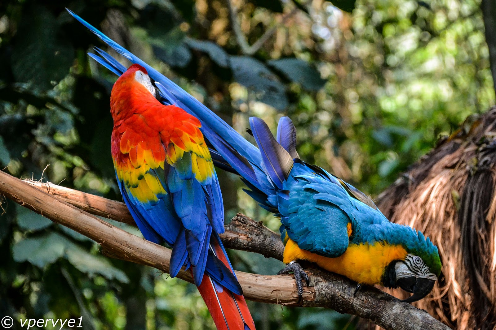 Попугаи из парка птиц. Бразилия
