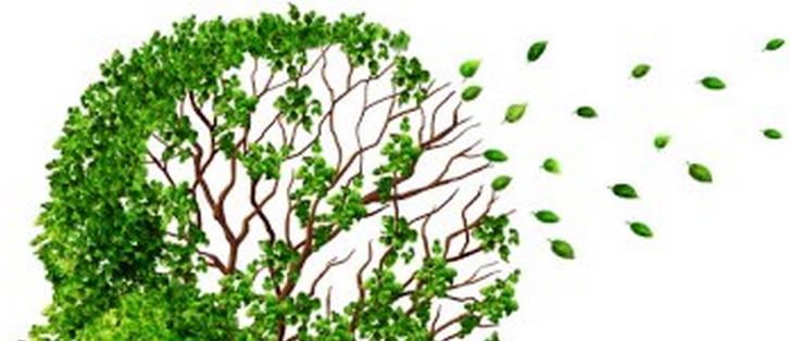 remedio natural para el alzheimer
