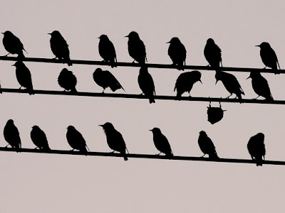 several birds on telephone wires with one upside down