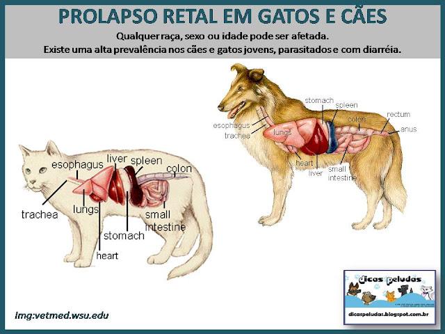 PROLAPSO+CARTAZ.jpg