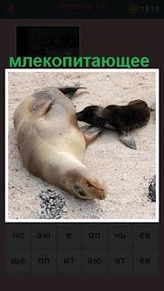 651 слов на песке лежит млекопитающее с детенышем 12 уровень