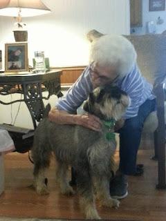 McELyea schnauzers pet therapy standard schnauzers