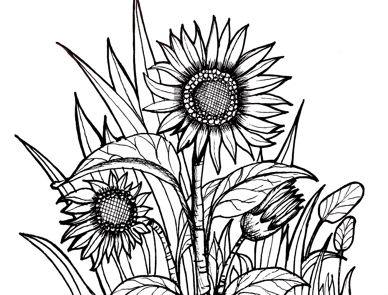 grass coloring pages coloring page place bob the builder coloring