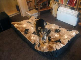 Designer Dog Bed Ideas