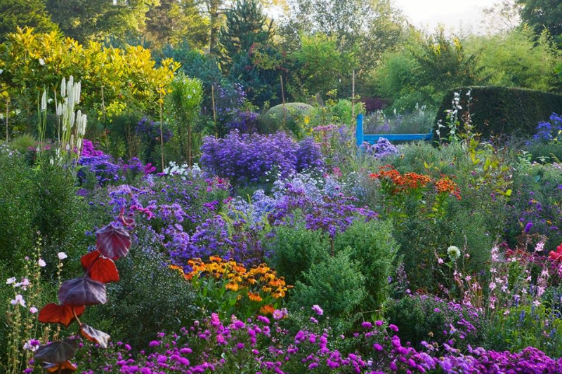Macizo en el jardín inglés The Picton Garden donde predominan variedades de Asters