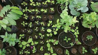 Cara Membuat Pupuk Organik Cair Untuk Masa Pertumbuhan