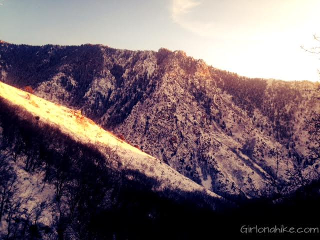 Rattlesnake Gulch, Millcreek Canyon, Hiking in Utah with Dogs