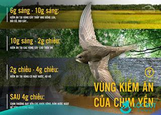 Khung thời ian chim yến kiếm ăn